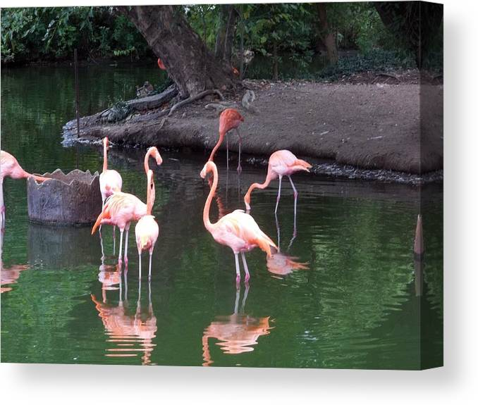 Flamingo Canvas Print featuring the photograph Flamingo by Brandy Lacey