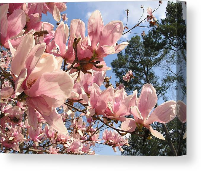 Flower Canvas Print featuring the photograph Give Praise To The Sun by Andrea Drake