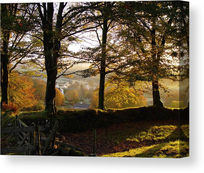 Leaves Countryside Dartmoor Uk Forest Wood Trees Golden Green Canvas Print featuring the photograph Golden Glow by Lloyd Burchell