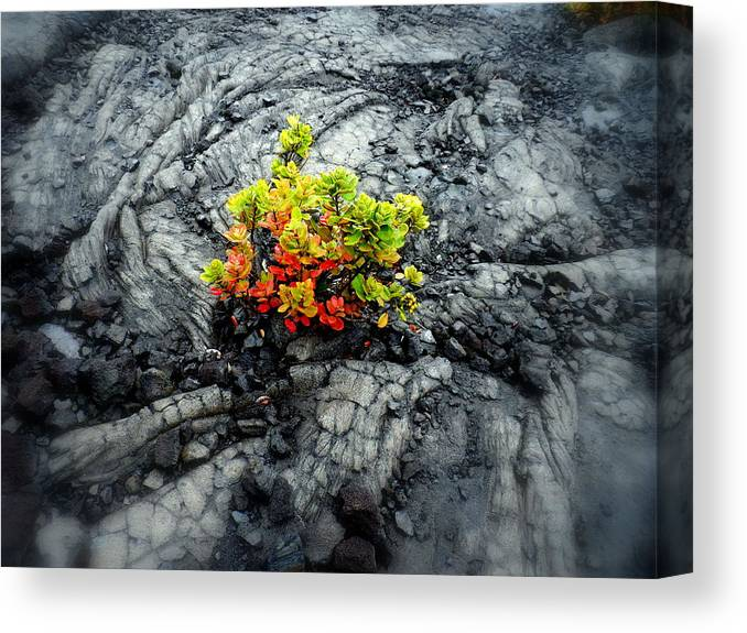 Canvas Print featuring the photograph Lava Flower by Vicente Russo