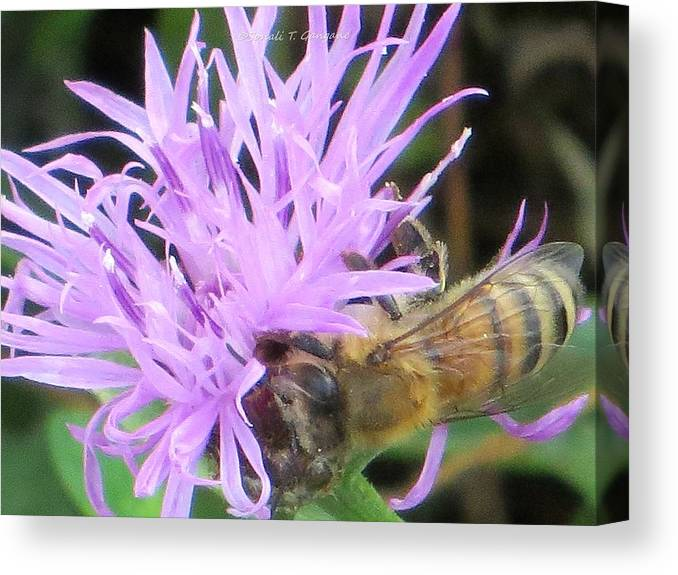Buzz Buzz Bee Canvas Print featuring the photograph Lavendar Affection by Sonali Gangane