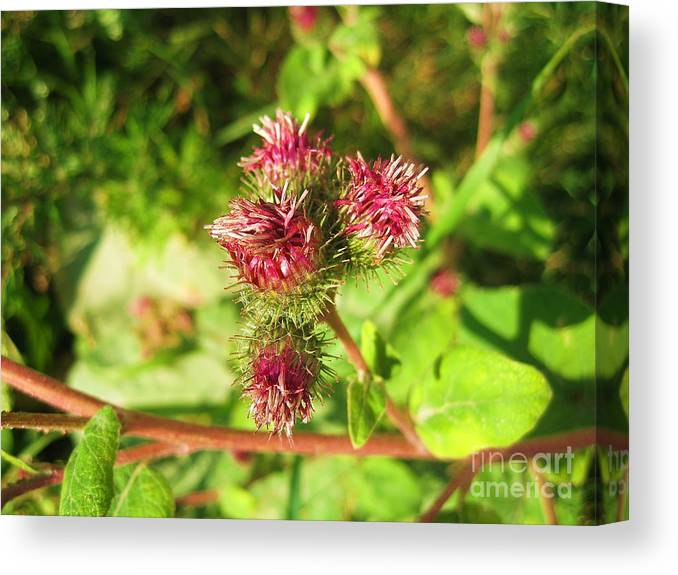Nature Canvas Print featuring the photograph Nature Natur by Yury Bashkin