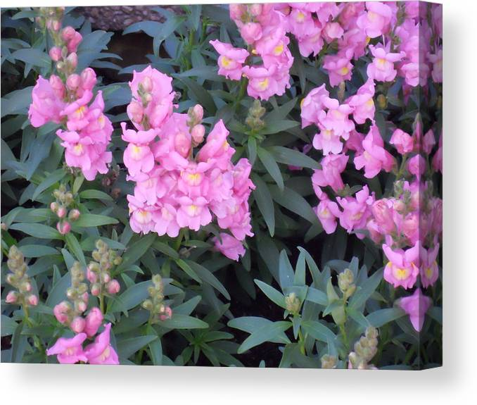 Delicate Canvas Print featuring the photograph Pink And Green by Jessica Smith