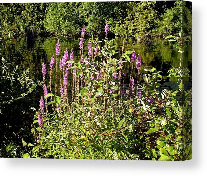 River Canvas Print featuring the photograph Pink by Dennis Leatherman