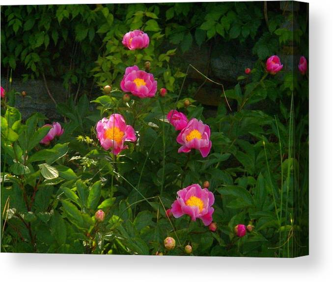 Flowers Canvas Print featuring the photograph Pink Flowers by Joyce Kimble Smith