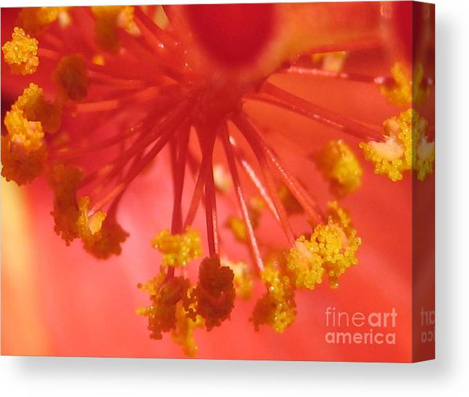 Pink Canvas Print featuring the photograph Pink Hibiscus Flower by Susan Carella
