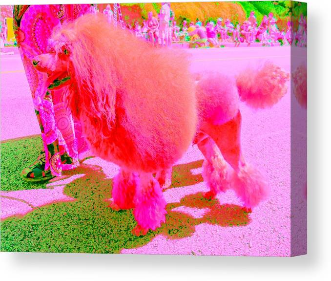 Dog Canvas Print featuring the digital art Really Pink Poodle by Randall Weidner