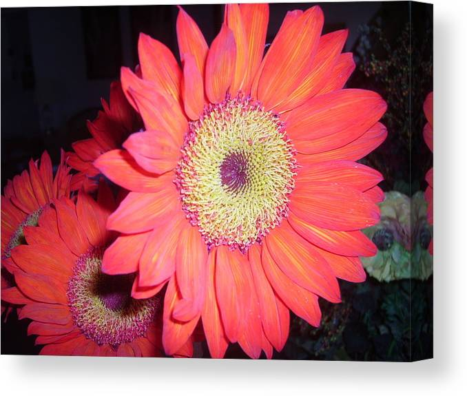 Flowers Canvas Print featuring the photograph Sun Burst by Fran Loando