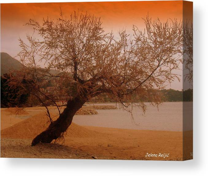 Landscape Canvas Print featuring the photograph yesterday when I was young by Jelena Reljic