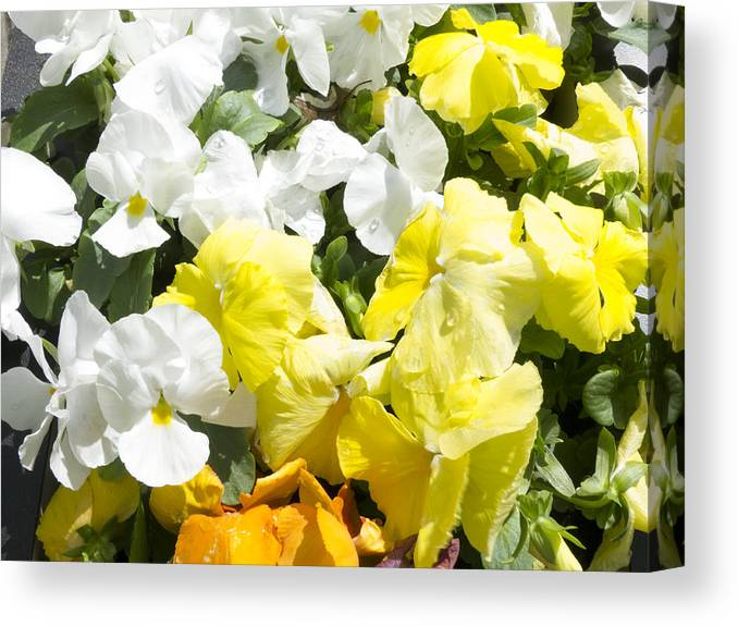 Flowers Canvas Print featuring the photograph ,, Flowers ,, by Ricardas Marcinkevicius