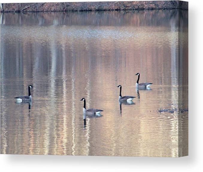 Canadian Geese Canvas Print featuring the photograph 2003-geese by Martha Abell
