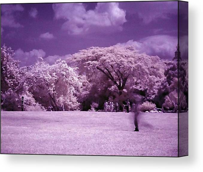 Infrared Canvas Print featuring the photograph Magic Garden by Galeria Trompiz