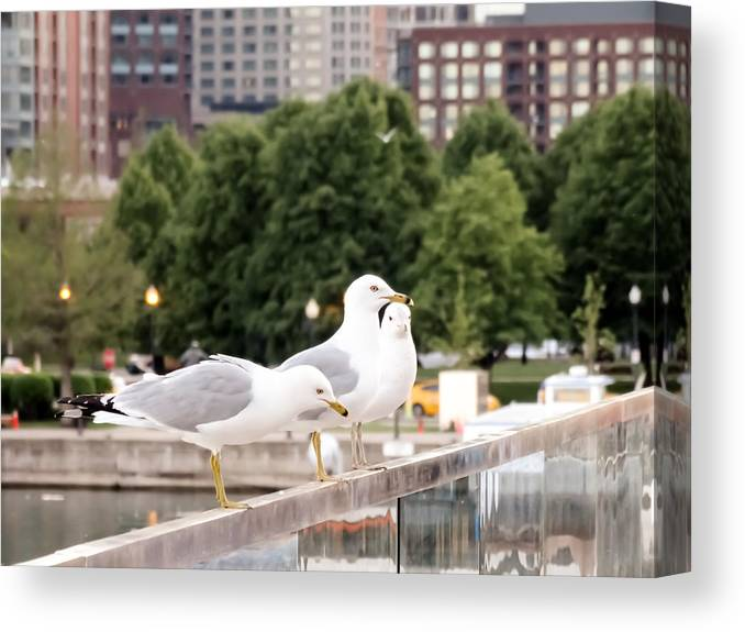 3 Seagulls In A Row Canvas Print featuring the photograph 3 Seagulls In A Row by Cynthia Woods