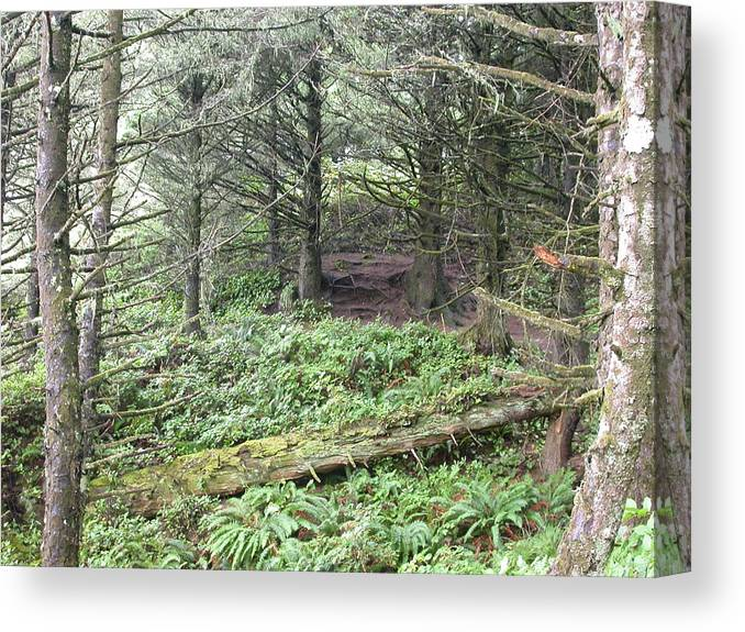 Landscape Canvas Print featuring the photograph A Shady Spot by Yvette Pichette