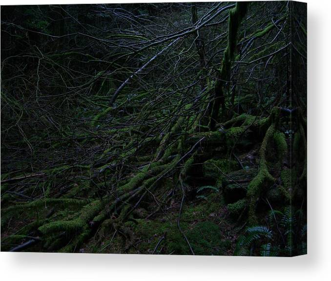 Arnor Canvas Print featuring the photograph Arboreal Forest by Jim Thomson