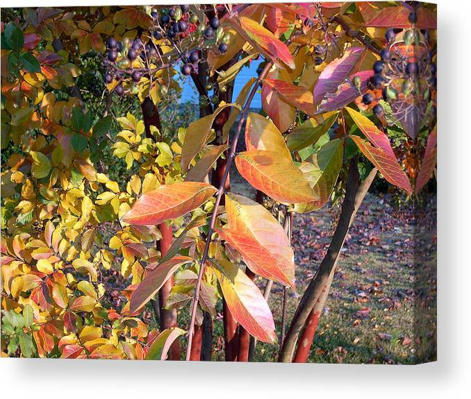 Fall Pictures Canvas Print featuring the photograph Autumn Leaves by Karin Dawn Kelshall- Best