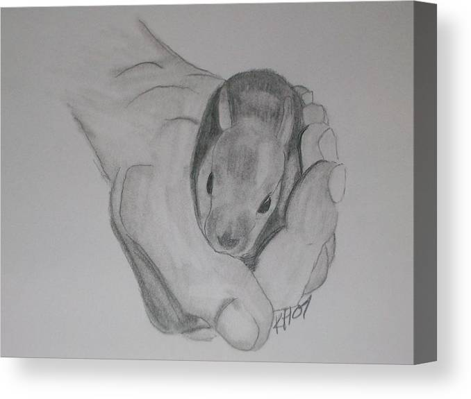 Canvas Print featuring the drawing Baby Bunny by Kristen Hurley