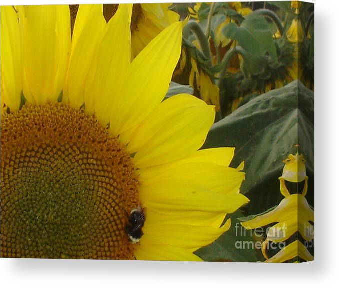 Bee's Canvas Print featuring the photograph Bee On Sunflower 1 by Chandelle Hazen