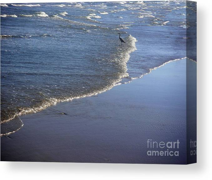 Nature Canvas Print featuring the photograph Being One With The Gulf - At Peace by Lucyna A M Green