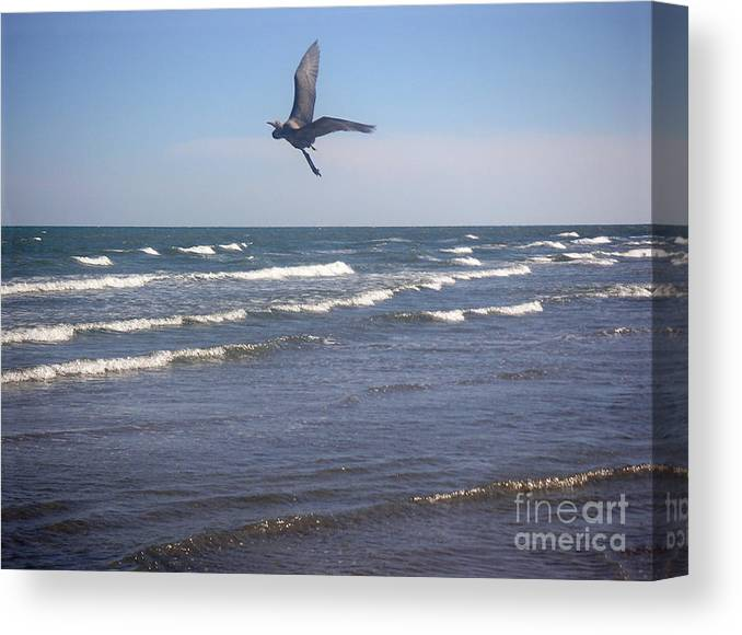 Nature Canvas Print featuring the photograph Being One With The Gulf - On Wings by Lucyna A M Green