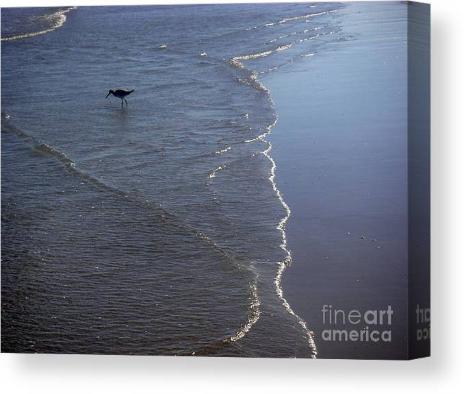 Nature Canvas Print featuring the photograph Being One With The Gulf - Pinpointing by Lucyna A M Green