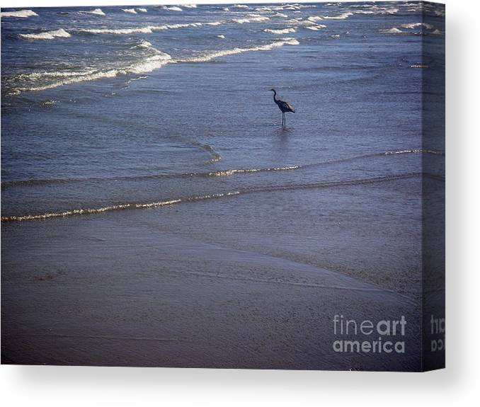 Nature Canvas Print featuring the photograph Being One With The Gulf - Watching by Lucyna A M Green