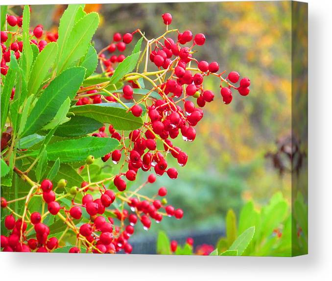 Macro Canvas Print featuring the photograph Berries Macro by Amie Ebert