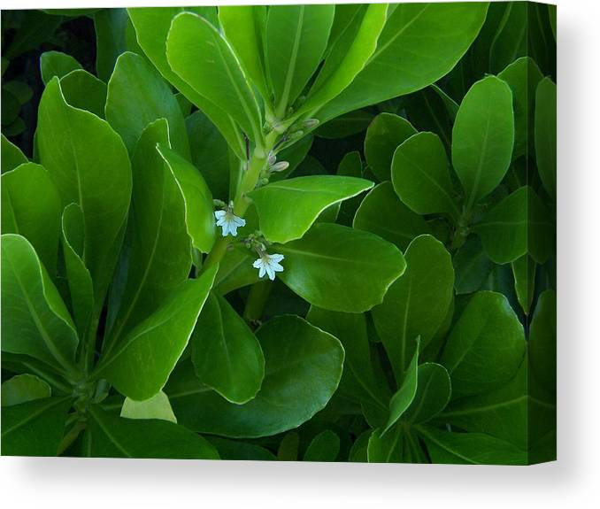 Wild Flowers Canvas Print featuring the photograph Blackwater Green by Charles Peck