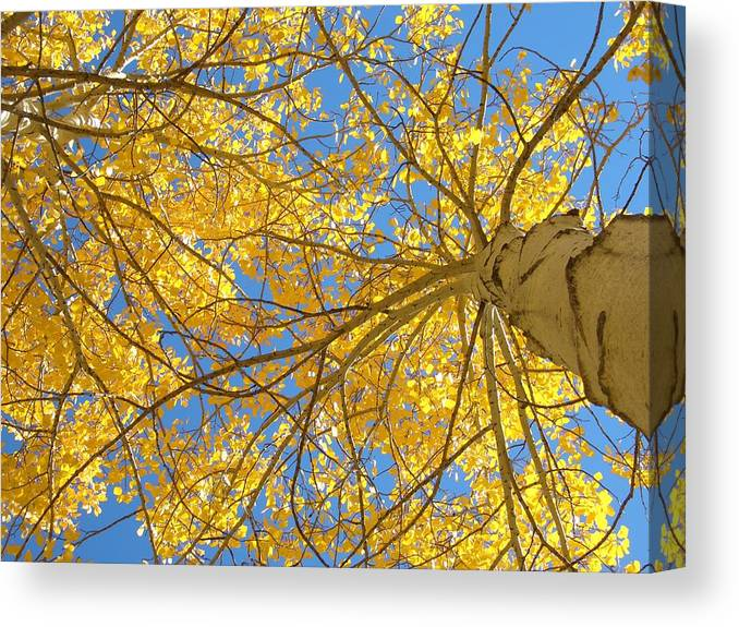 Aspen Canvas Print featuring the photograph Blue And Gold II by Brian Anderson