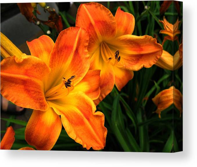 Orange Canvas Print featuring the photograph Brilliant by Carol Sweetwood