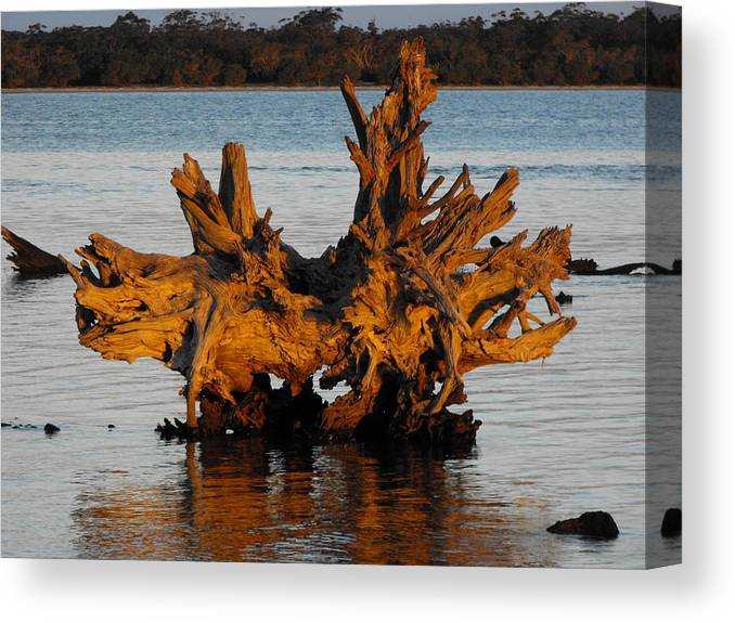 Wood Canvas Print featuring the photograph Bronzed Wood by Marlene Challis
