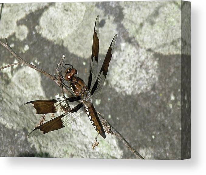 Dragonfly Canvas Print featuring the photograph Brown Dragonfly by Mother Nature