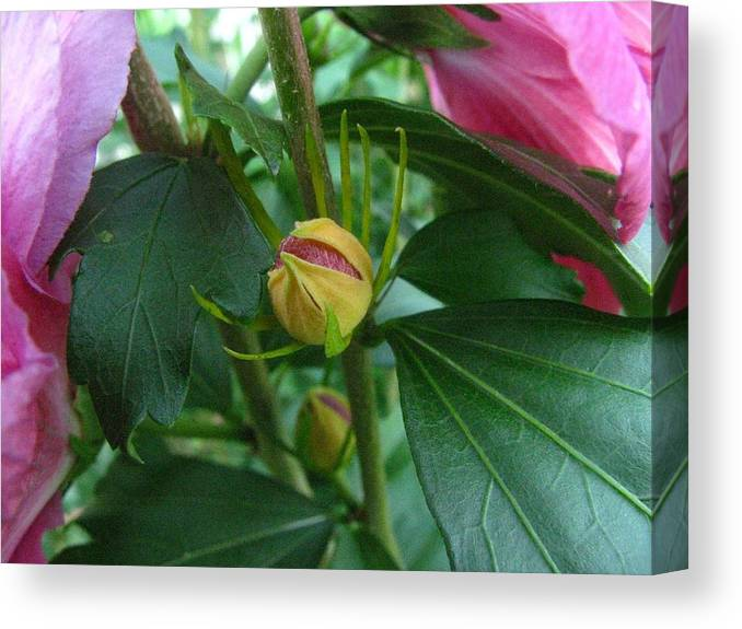 Flowers Canvas Print featuring the photograph Budding Into Beauty by Rusty Gentry