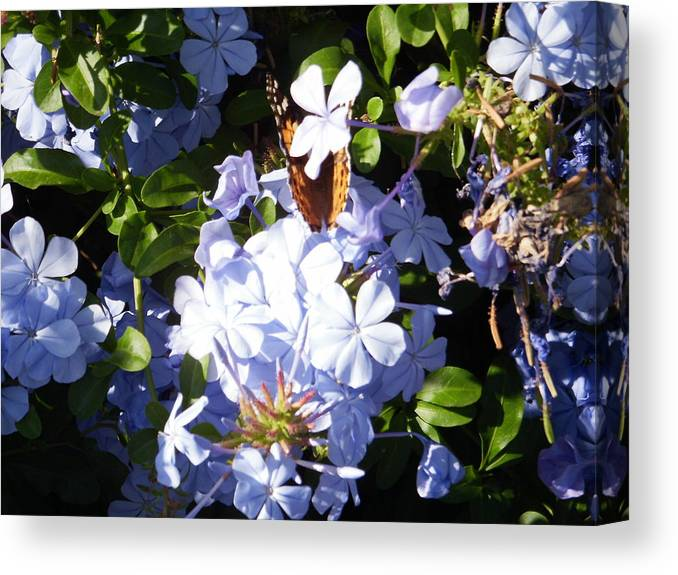 Butterfly Canvas Print featuring the photograph Butterfly I by Edward Wolverton