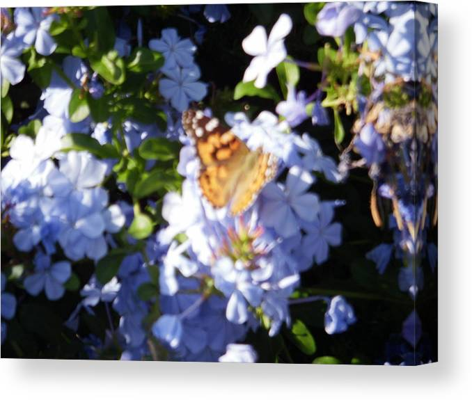 Butterfly Canvas Print featuring the photograph Butterfly Iv by Edward Wolverton