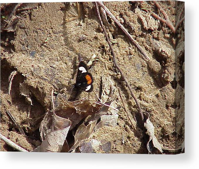 Pastoral Scenes Canvas Print featuring the photograph Butterfly Of Ok. by Morris Johnston
