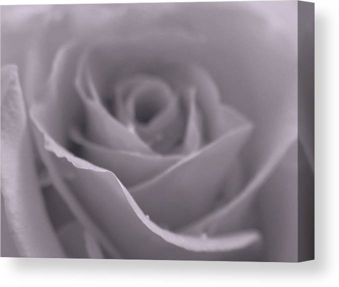 Rose Canvas Print featuring the photograph Bw Rose by Juergen Roth