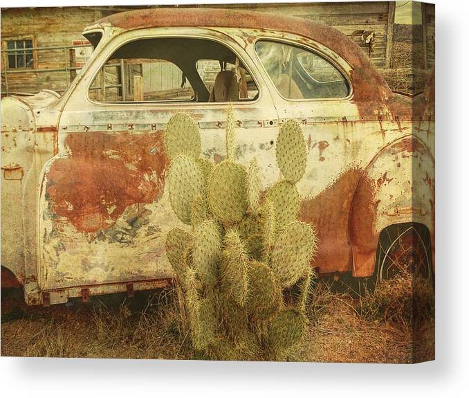 Desert Canvas Print featuring the photograph Cactus Car by Donna Lee Young