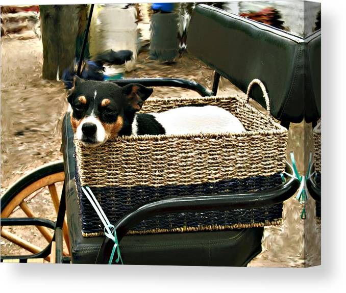 Dog Canvas Print featuring the photograph Carriage Dog by Amie Ebert
