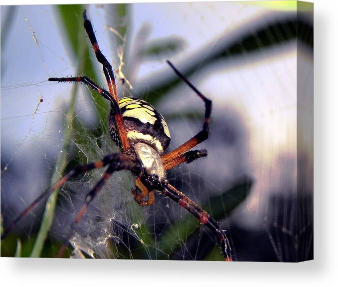 Spider Canvas Print featuring the photograph Close Encounters by Mike Farmer