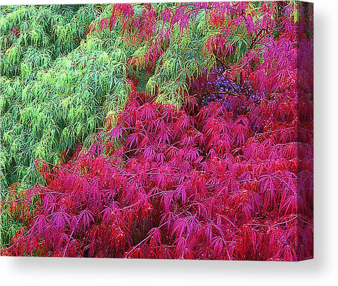 Tree Canvas Print featuring the photograph Colored Leaves by John Toxey