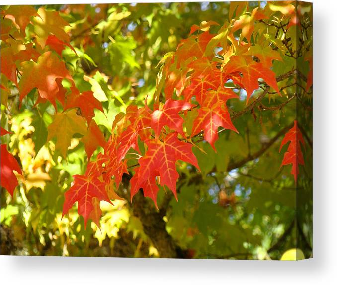 Autumn Canvas Print featuring the photograph Colorful Fall Leaves Red Nature Landscape Baslee Troutman by Baslee Troutman
