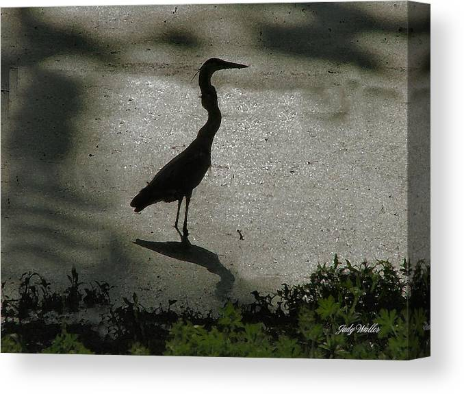 Bird Canvas Print featuring the photograph Crane Reflections by Judy Waller