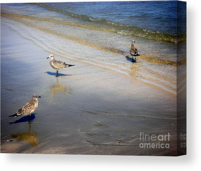 Nature Canvas Print featuring the photograph Creatures Of The Gulf - Which Way by Lucyna A M Green