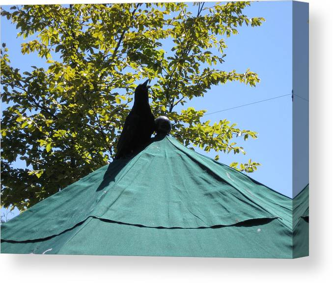 Crow On An Umbrella Animal Canvas Print featuring the photograph Crow On An Umbrella by AJ Brown
