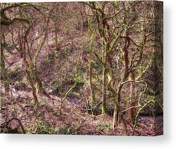 Abstract Canvas Print featuring the photograph Deep In Woods by Svetlana Sewell