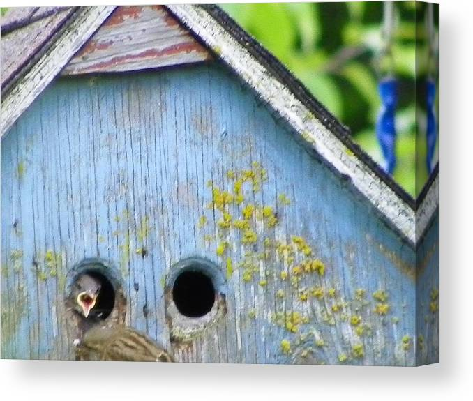 Digital Photography Canvas Print featuring the photograph Dinnertime by Laurie Kidd