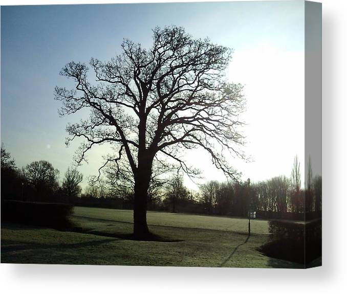 Tree Canvas Print featuring the photograph Early Morning Tree In Winter by Ian Andrews