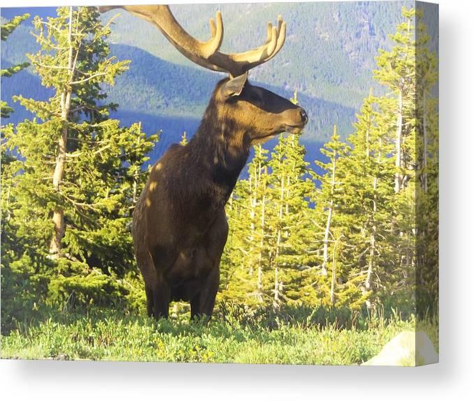 Canvas Print featuring the photograph elk by Wyatt J Brundage