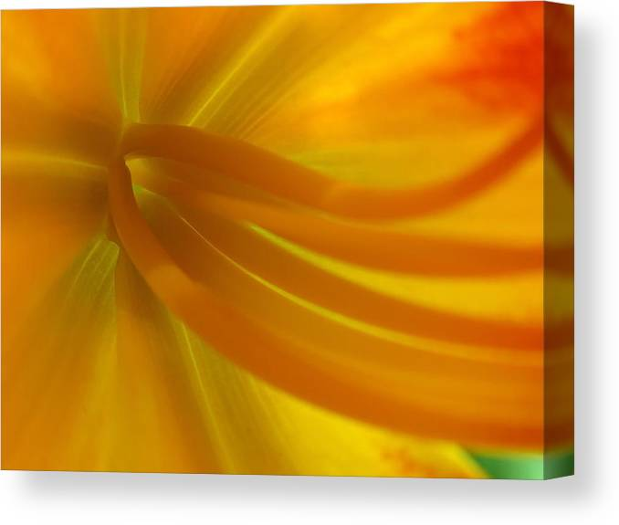 Luminous Canvas Print featuring the photograph Explosion by Juergen Roth